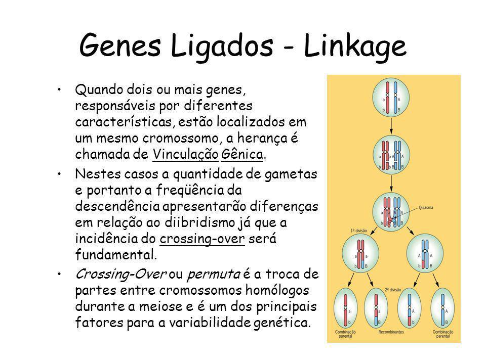 Genes Ligados - Linkage Quando dois ou mais genes, responsáveis por diferentes características, estão localizados em um mesmo cromossomo, a herança é