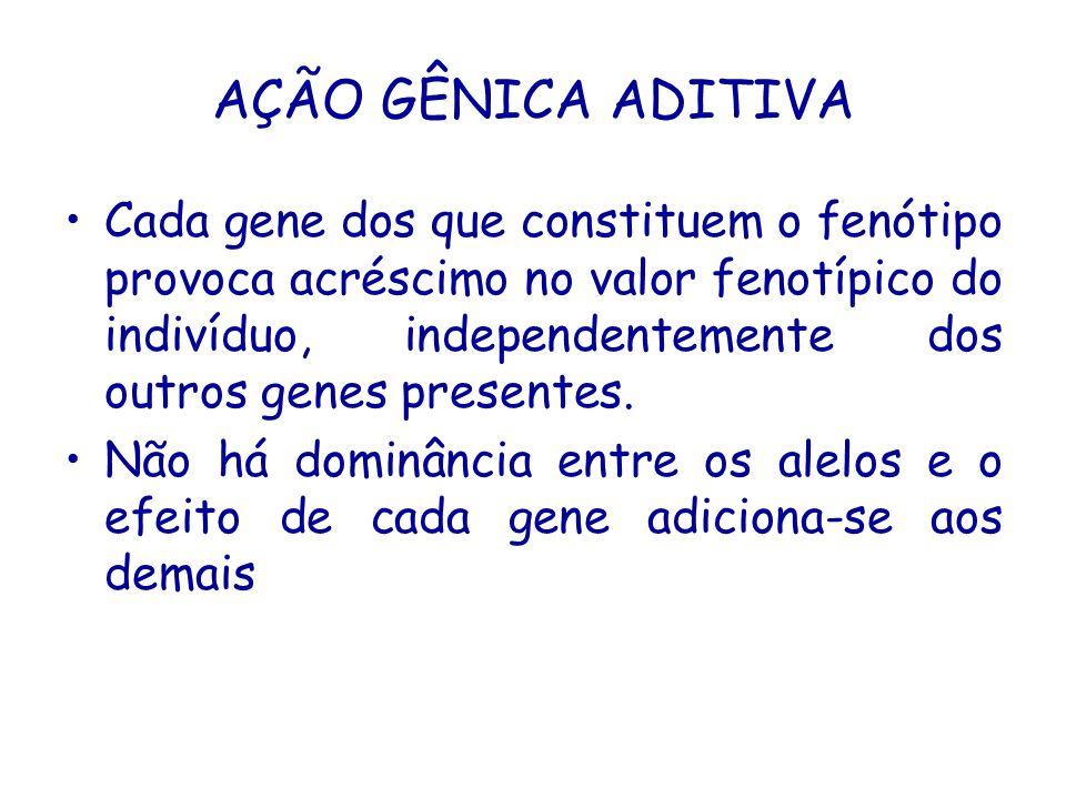 AÇÃO GÊNICA ADITIVA Cada gene dos que constituem o fenótipo provoca acréscimo no valor fenotípico do indivíduo, independentemente dos outros genes presentes.