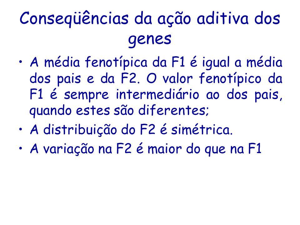 Conseqüências da ação aditiva dos genes A média fenotípica da F1 é igual a média dos pais e da F2.