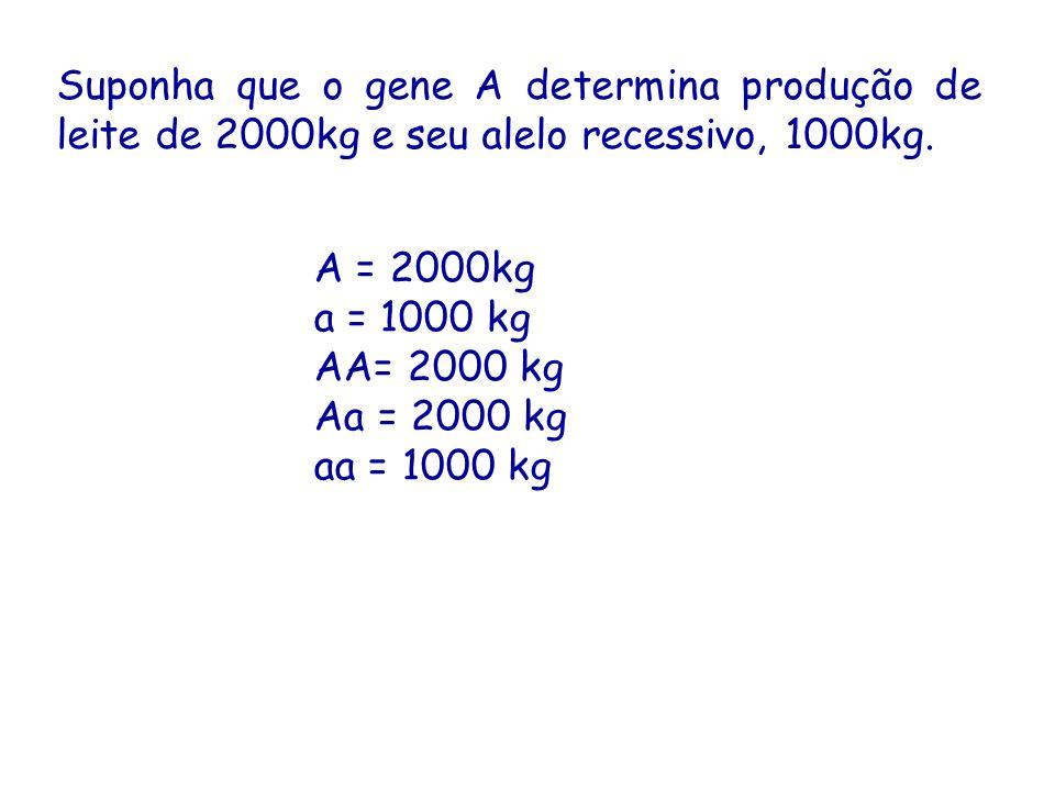 Suponha que o gene A determina produção de leite de 2000kg e seu alelo recessivo, 1000kg.