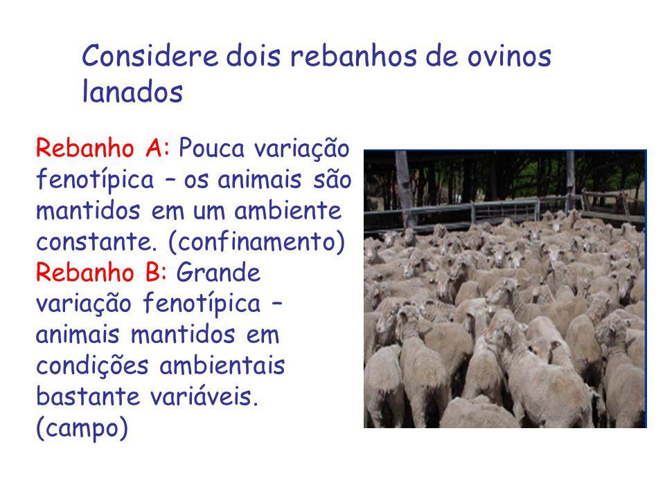 Considere dois rebanhos de ovinos lanados Rebanho A: Pouca variação fenotípica – os animais são mantidos em um ambiente constante.