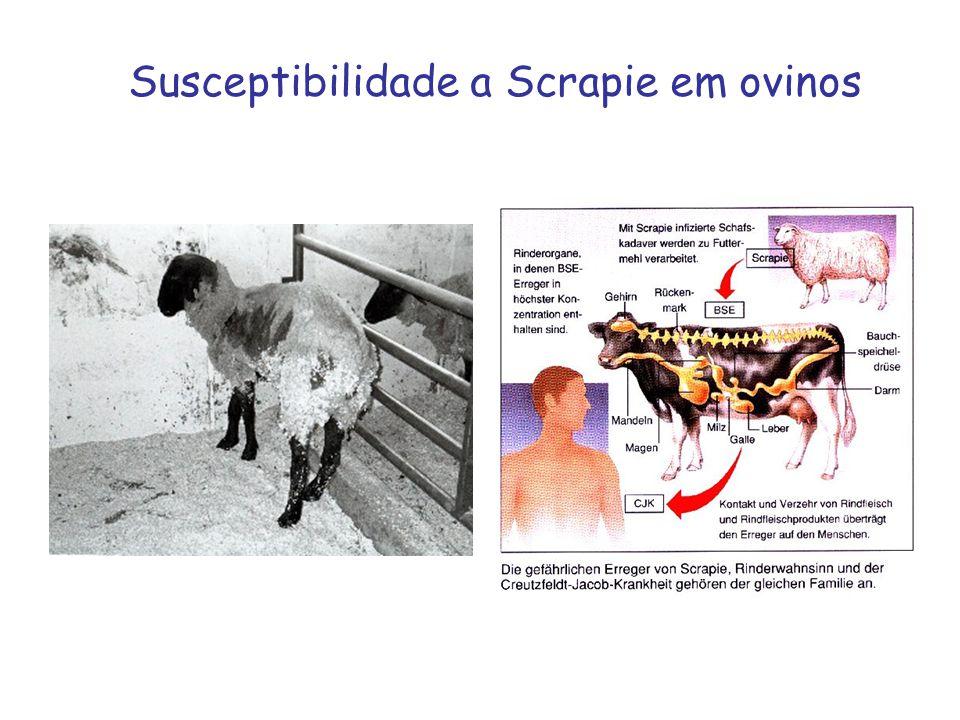 Susceptibilidade a Scrapie em ovinos