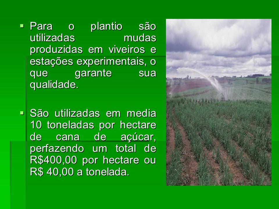 Para o plantio são utilizadas mudas produzidas em viveiros e estações experimentais, o que garante sua qualidade.