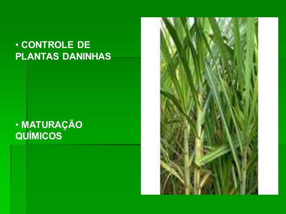CONTROLE DE PLANTAS DANINHAS MATURAÇÃO QUÍMICOS