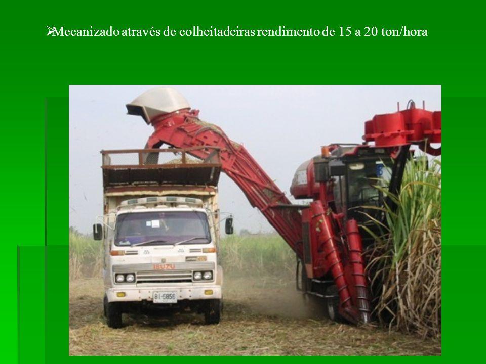 Mecanizado através de colheitadeiras rendimento de 15 a 20 ton/hora