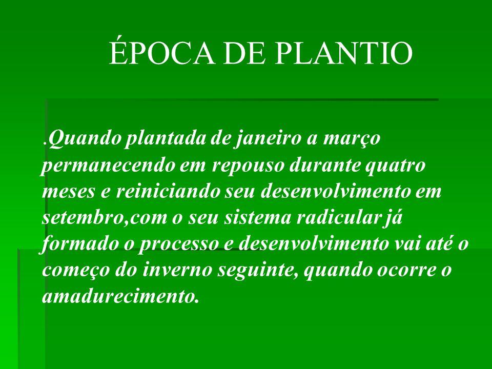 ÉPOCA DE PLANTIO.
