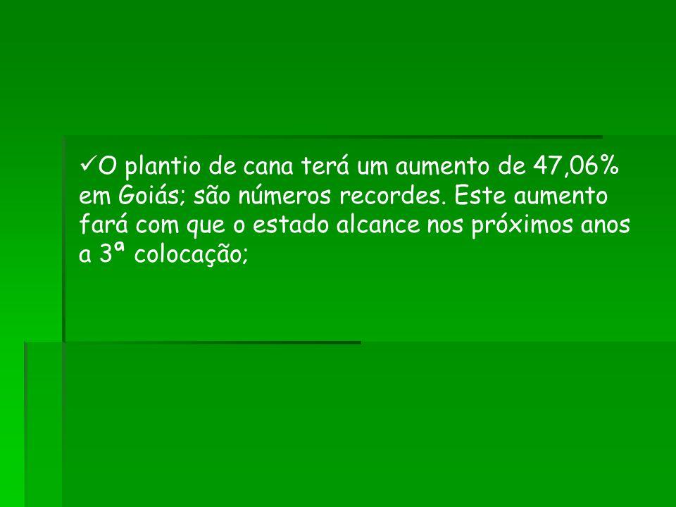 O plantio de cana terá um aumento de 47,06% em Goiás; são números recordes.