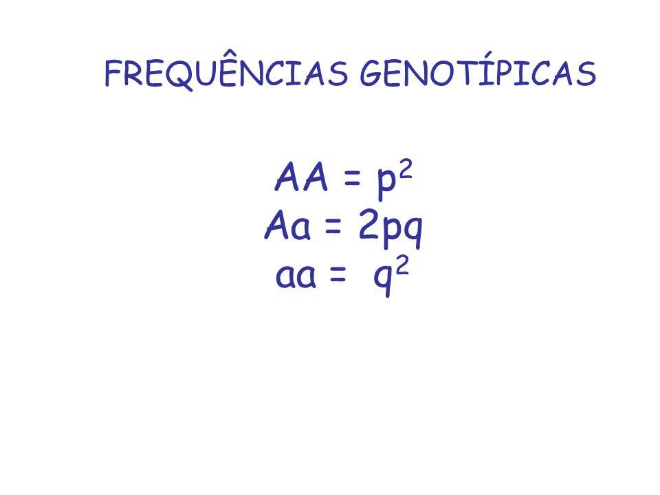 AA = p 2 Aa = 2pq aa = q 2 FREQUÊNCIAS GENOTÍPICAS