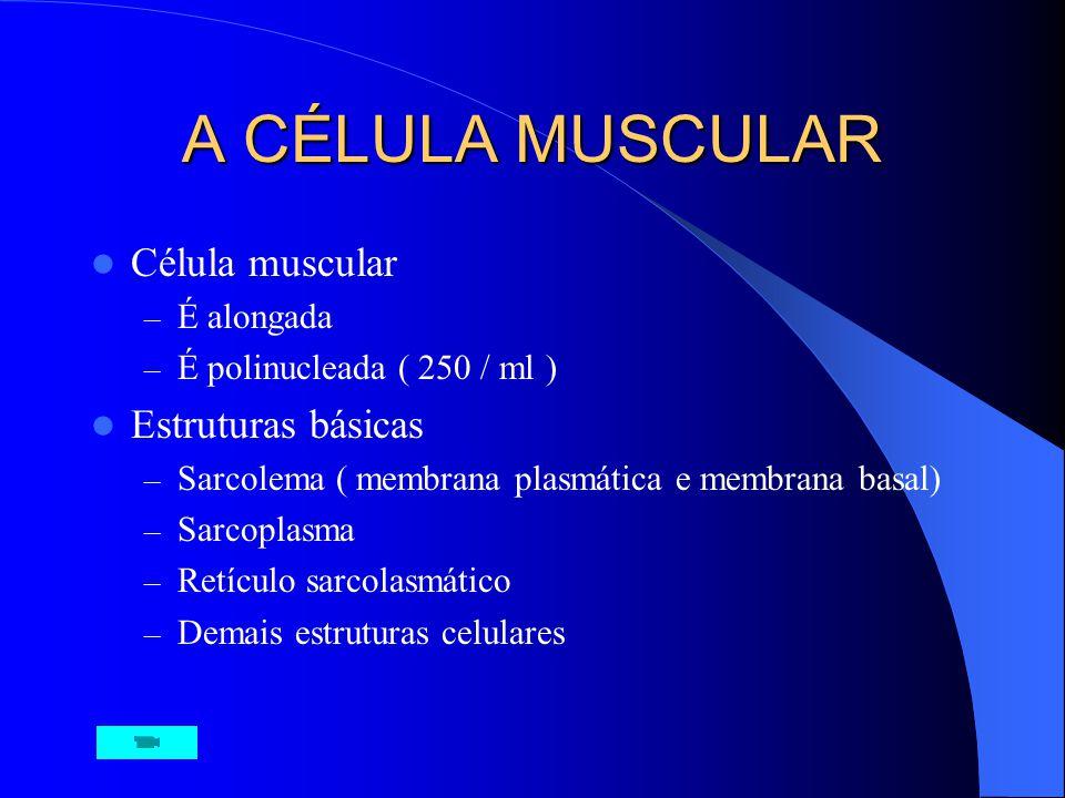 CONCEITOS 660 músculos, cerca 40% do PC, mais 10% de músculos lisos. Composição: Água ( 75%), proteína ( 20%) e sais, fosfato, uréia lactato, minerais