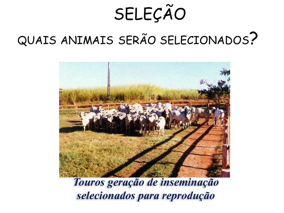 SELEÇÃO QUAIS ANIMAIS SERÃO SELECIONADOS ?
