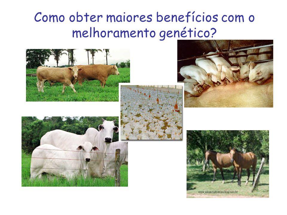 Como obter maiores benefícios com o melhoramento genético?