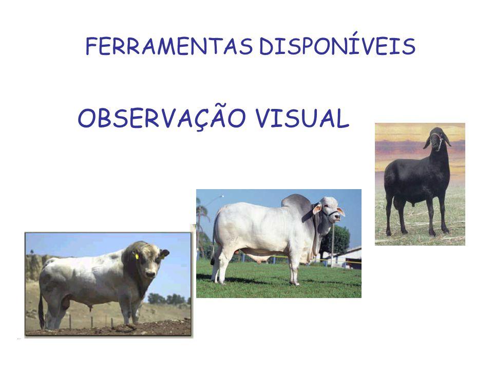 FERRAMENTAS DISPONÍVEIS OBSERVAÇÃO VISUAL