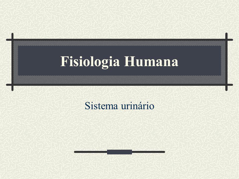 Fisiologia Humana Sistema urinário