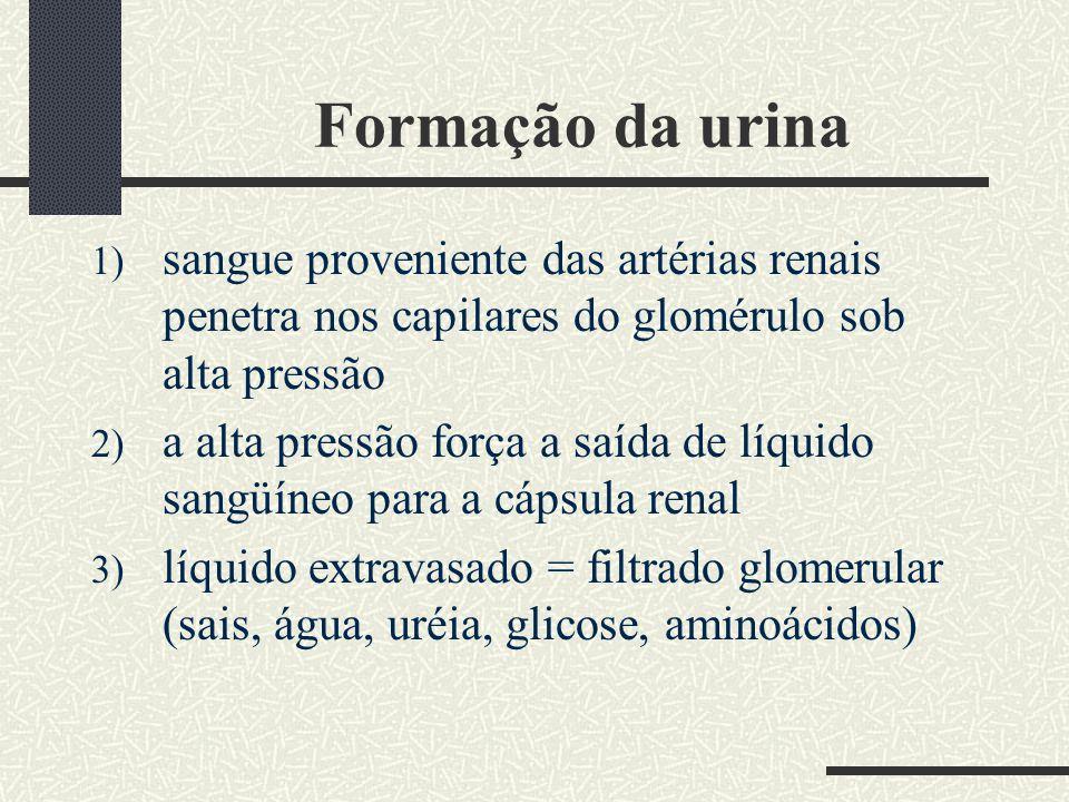 Formação da urina 1) sangue proveniente das artérias renais penetra nos capilares do glomérulo sob alta pressão 2) a alta pressão força a saída de líq