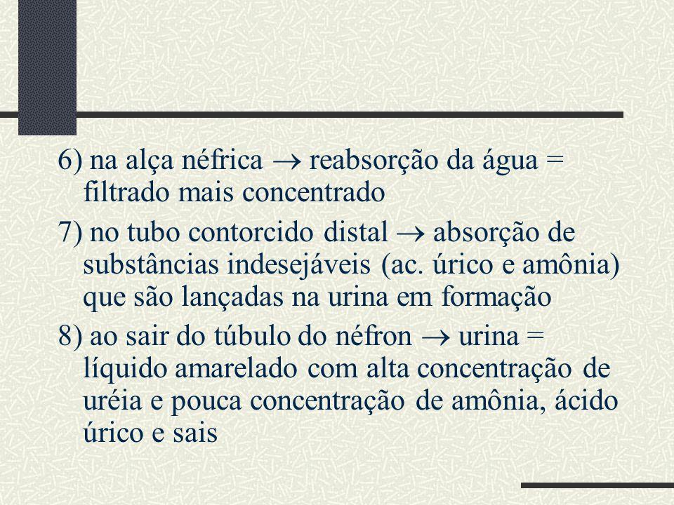 6) na alça néfrica reabsorção da água = filtrado mais concentrado 7) no tubo contorcido distal absorção de substâncias indesejáveis (ac. úrico e amôni