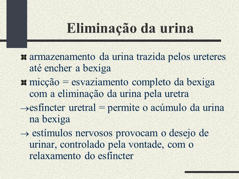 Eliminação da urina armazenamento da urina trazida pelos ureteres até encher a bexiga micção = esvaziamento completo da bexiga com a eliminação da uri