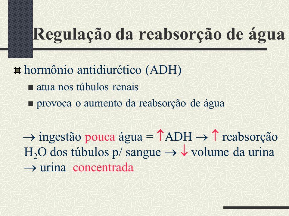 Regulação da reabsorção de água hormônio antidiurético (ADH) atua nos túbulos renais provoca o aumento da reabsorção de água ingestão pouca água = ADH