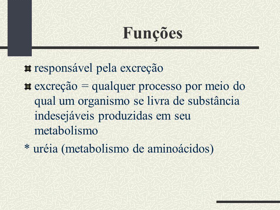 Funções responsável pela excreção excreção = qualquer processo por meio do qual um organismo se livra de substância indesejáveis produzidas em seu met