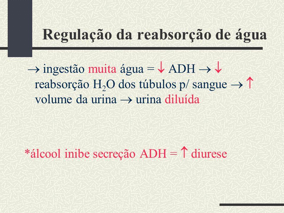 Regulação da reabsorção de água ingestão muita água = ADH reabsorção H 2 O dos túbulos p/ sangue volume da urina urina diluída *álcool inibe secreção