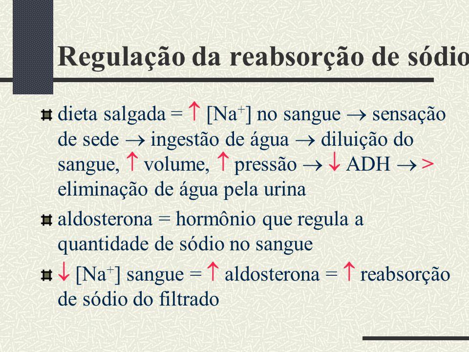 Regulação da reabsorção de sódio dieta salgada = [Na + ] no sangue sensação de sede ingestão de água diluição do sangue, volume, pressão ADH > elimina