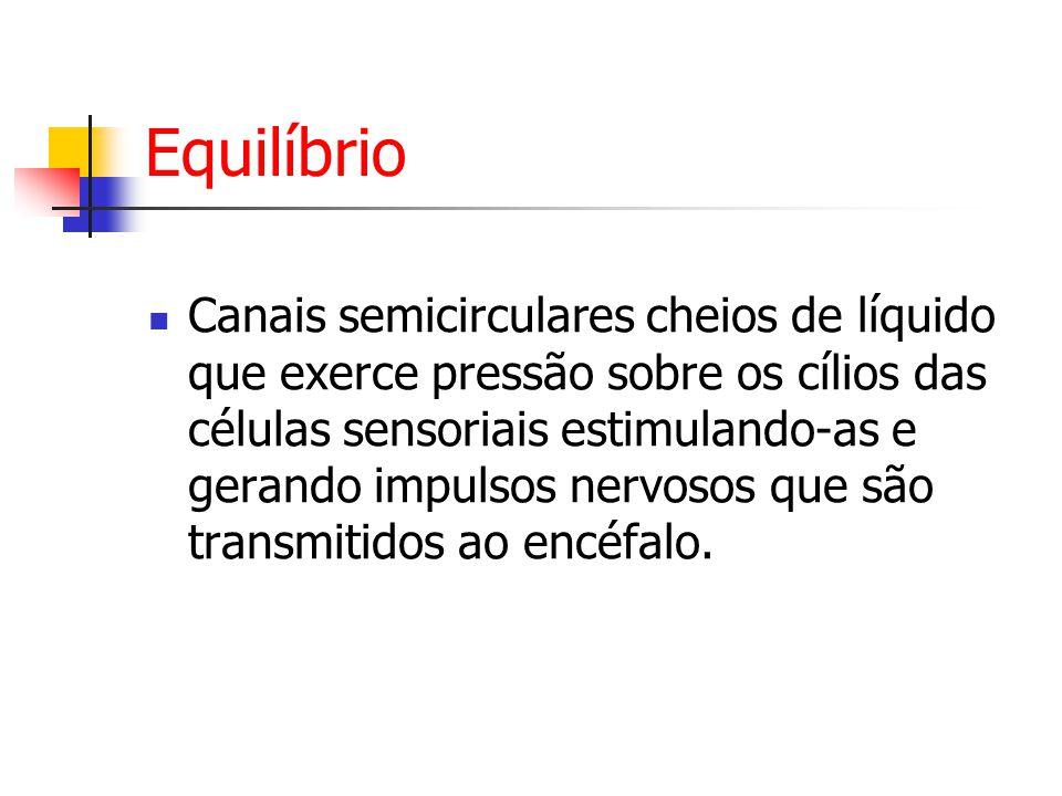 Equilíbrio Canais semicirculares cheios de líquido que exerce pressão sobre os cílios das células sensoriais estimulando-as e gerando impulsos nervosos que são transmitidos ao encéfalo.