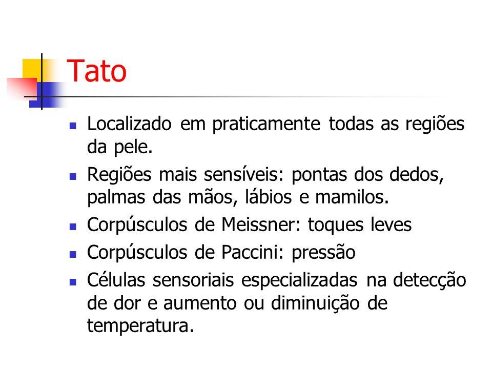 Tato Localizado em praticamente todas as regiões da pele.