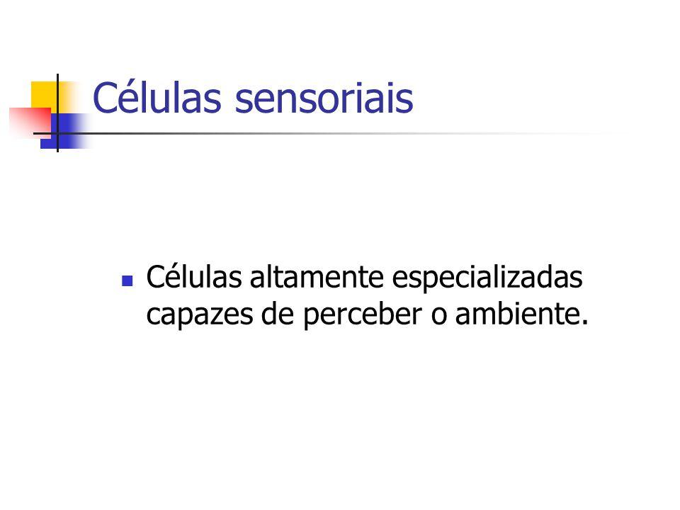 Visão Conjuntiva: membrana transparente que reveste os bulbos dos olhos.