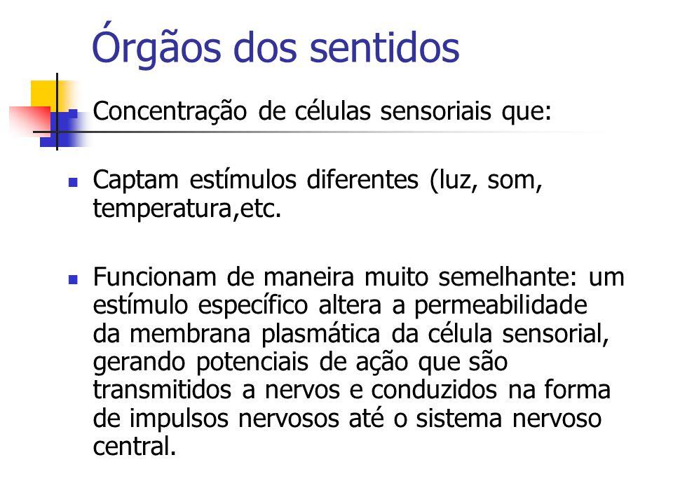 Órgãos dos sentidos Concentração de células sensoriais que: Captam estímulos diferentes (luz, som, temperatura,etc.