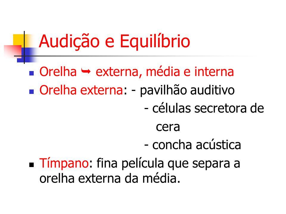 Audição e Equilíbrio Orelha externa, média e interna Orelha externa: - pavilhão auditivo - células secretora de cera - concha acústica Tímpano: fina película que separa a orelha externa da média.