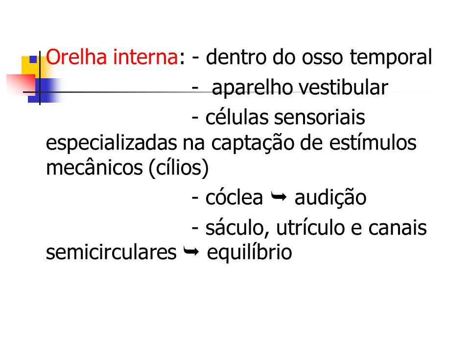 Orelha interna: - dentro do osso temporal - aparelho vestibular - células sensoriais especializadas na captação de estímulos mecânicos (cílios) - cóclea audição - sáculo, utrículo e canais semicirculares equilíbrio