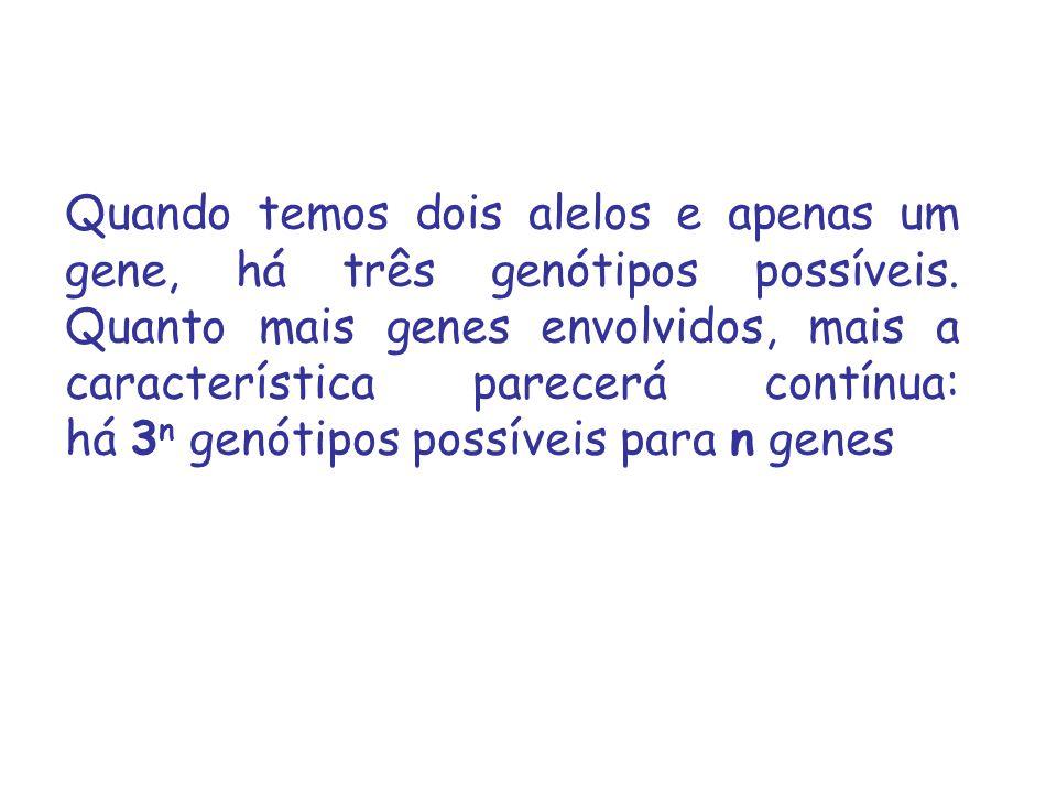 Quando temos dois alelos e apenas um gene, há três genótipos possíveis. Quanto mais genes envolvidos, mais a característica parecerá contínua: há 3 n