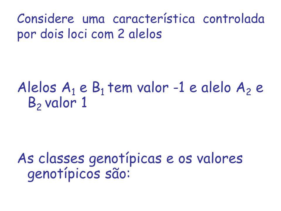 Considere uma característica controlada por dois loci com 2 alelos Alelos A 1 e B 1 tem valor -1 e alelo A 2 e B 2 valor 1 As classes genotípicas e os