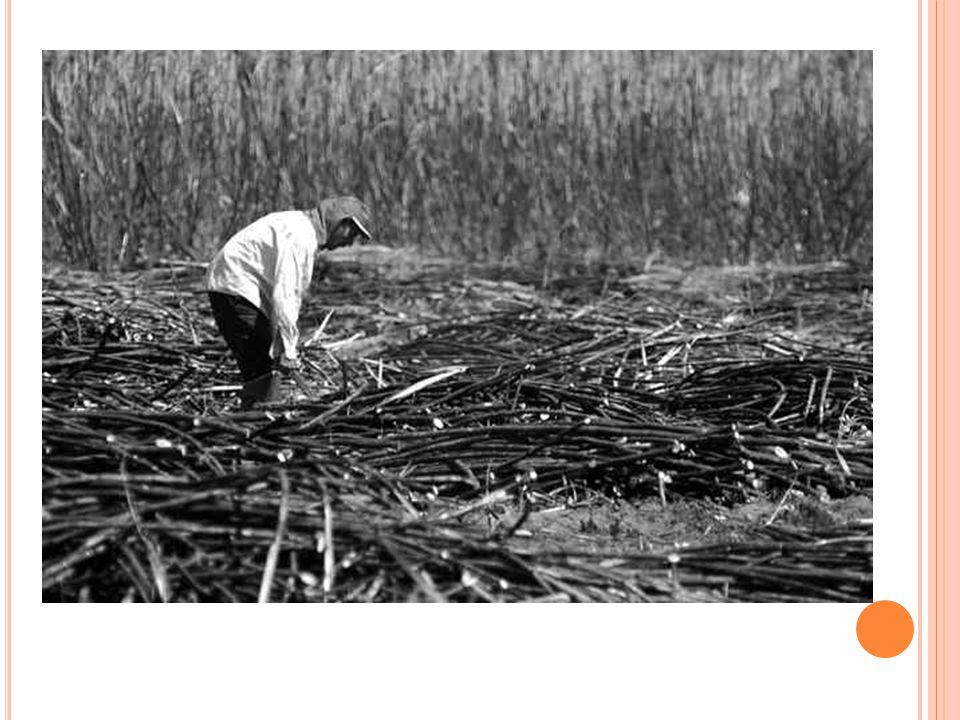 A ESTRUTURA FUNDIÁRIA 1970: criação do INCRA (Instituto de Colonização e Reforma Agrária).