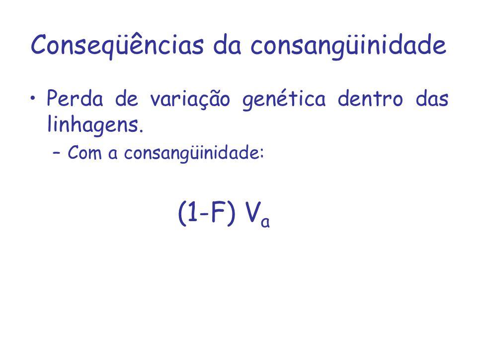 Conseqüências da consangüinidade Perda de variação genética dentro das linhagens. –Com a consangüinidade: (1-F) V a