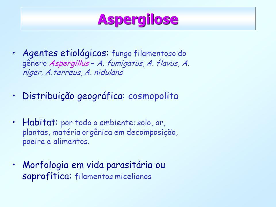 Aspergilose Agentes etiológicos: fungo filamentoso do gênero Aspergillus – A. fumigatus, A. flavus, A. niger, A.terreus, A. nidulans Distribuição geog