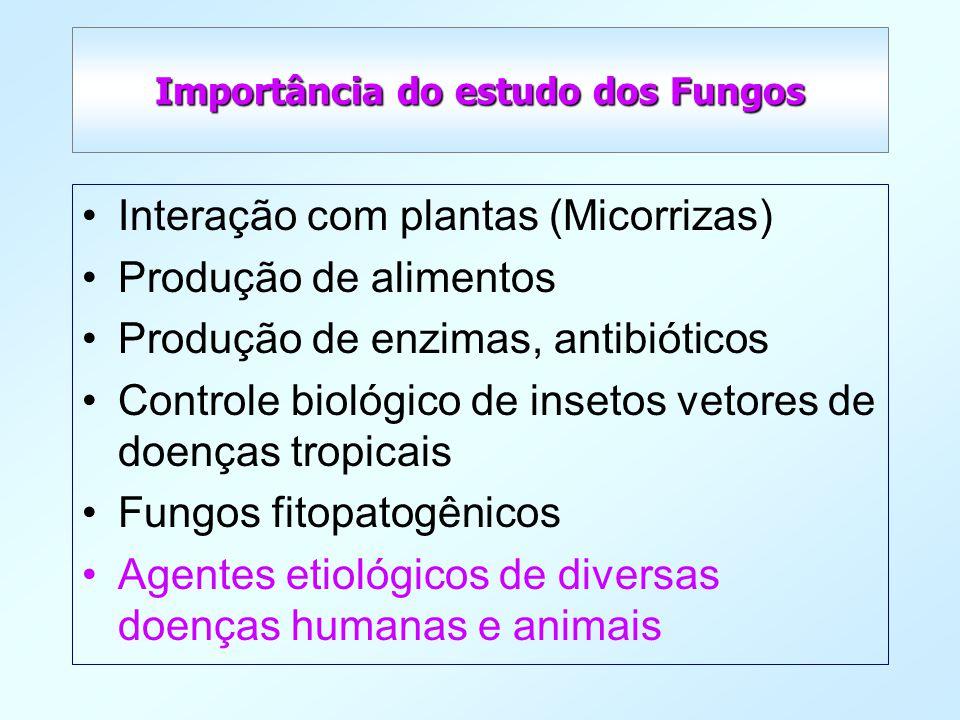 Importância do estudo dos Fungos Interação com plantas (Micorrizas) Produção de alimentos Produção de enzimas, antibióticos Controle biológico de inse