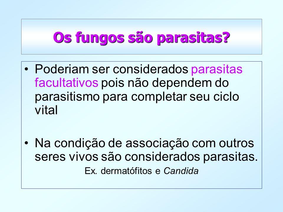 Os fungos são parasitas? Poderiam ser considerados parasitas facultativos pois não dependem do parasitismo para completar seu ciclo vital Na condição
