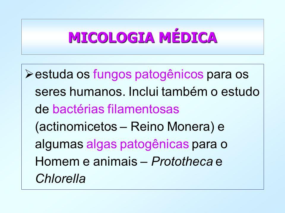 MICOLOGIA MÉDICA estuda os fungos patogênicos para os seres humanos. Inclui também o estudo de bactérias filamentosas (actinomicetos – Reino Monera) e