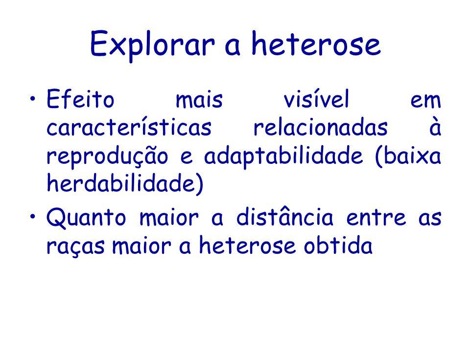 Explorar a heterose Efeito mais visível em características relacionadas à reprodução e adaptabilidade (baixa herdabilidade) Quanto maior a distância e