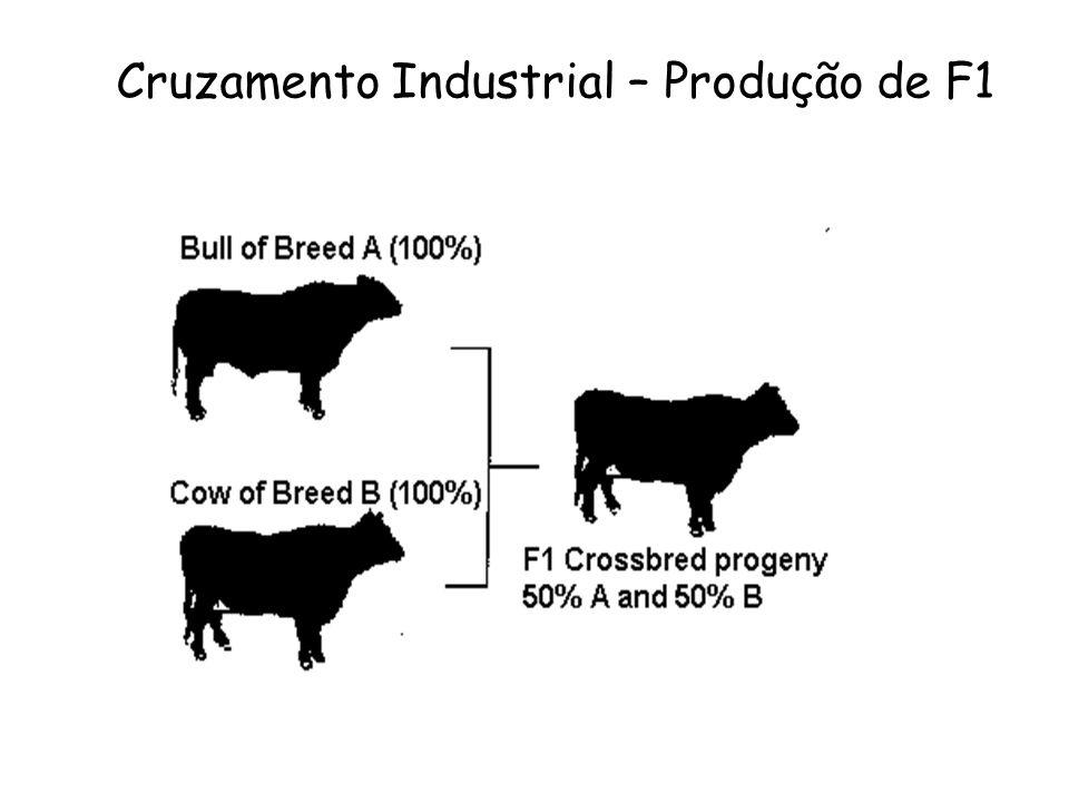 Cruzamento Industrial – Produção de F1