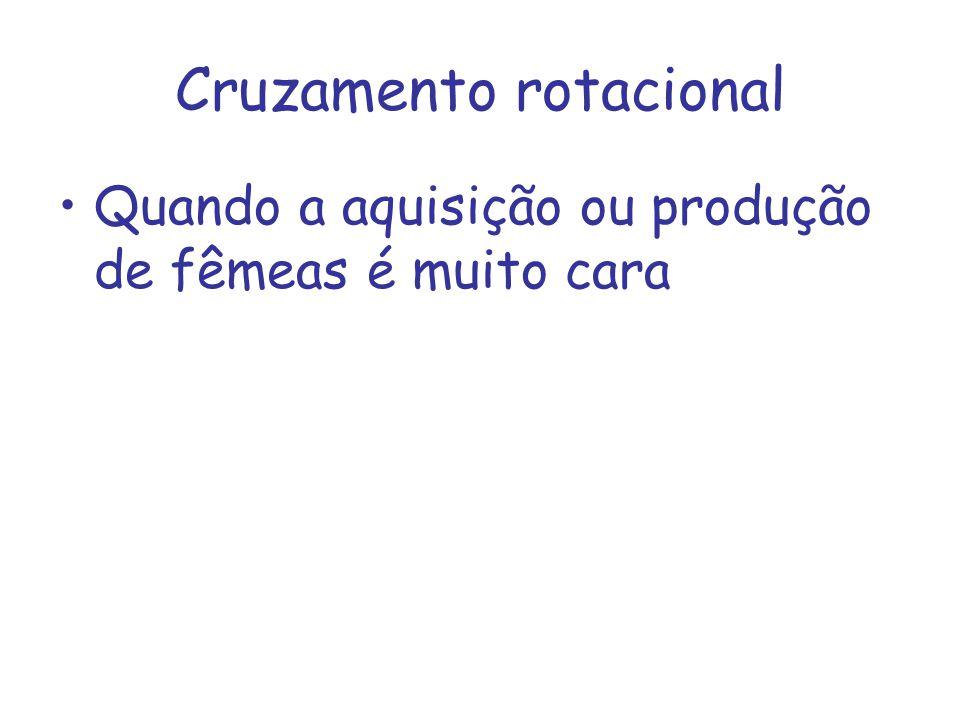 Cruzamento rotacional Quando a aquisição ou produção de fêmeas é muito cara