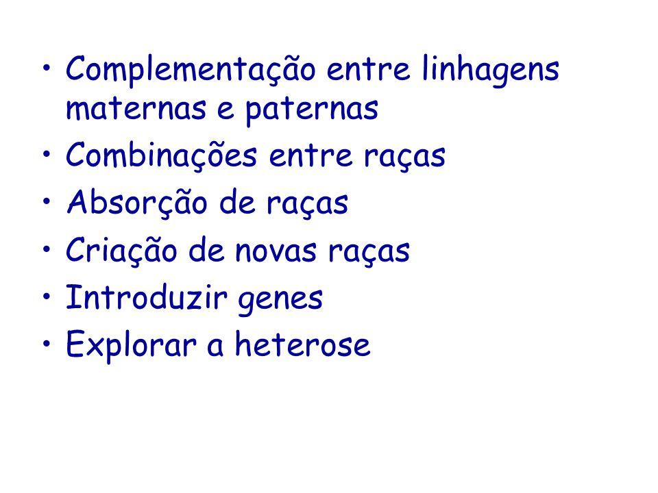 Complementação entre linhagens maternas e paternas Raça ou linhagem paterna: grande, crescimento rápido, boa carcaça Raça ou linhagem materna : tamanho adulto pequeno, boa fertilidade Promove o aumento da eficiência do sistema de produção
