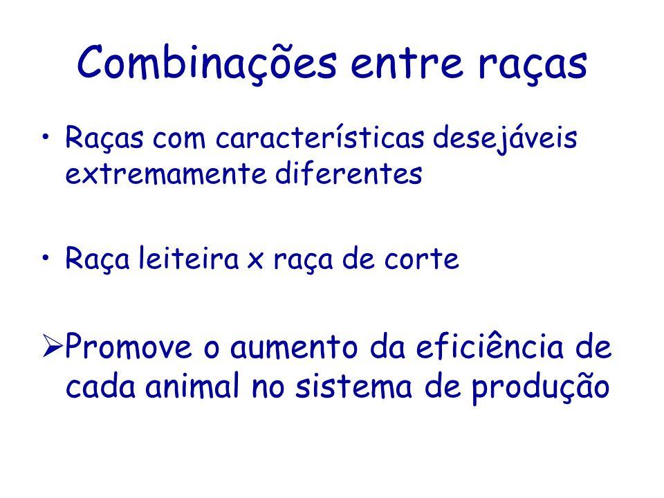 Combinações entre raças Raças com características desejáveis extremamente diferentes Raça leiteira x raça de corte Promove o aumento da eficiência de