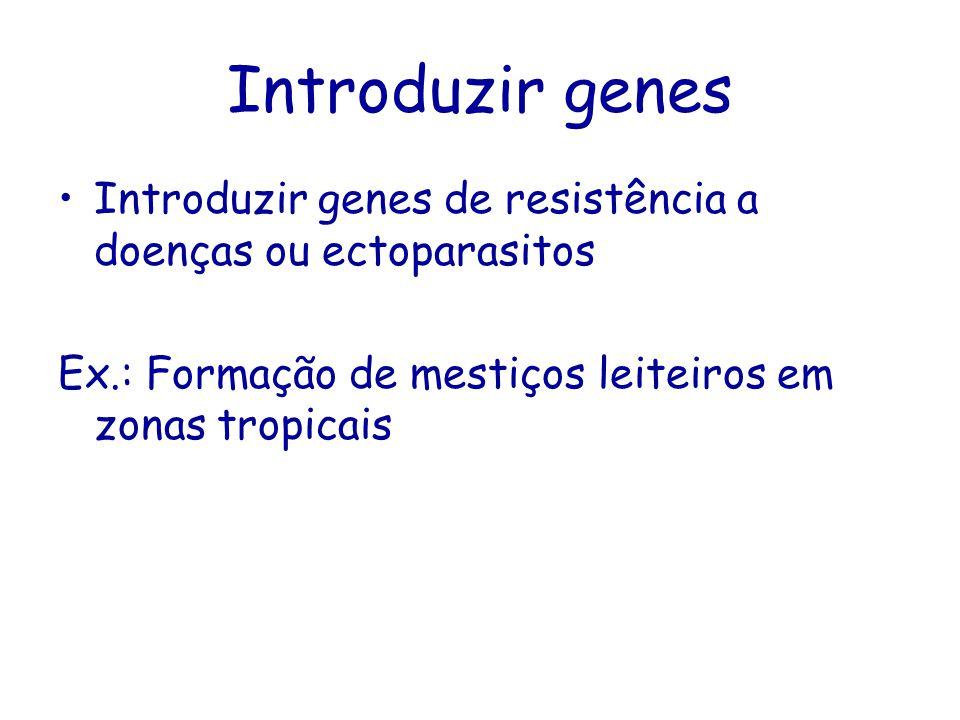 Introduzir genes Introduzir genes de resistência a doenças ou ectoparasitos Ex.: Formação de mestiços leiteiros em zonas tropicais