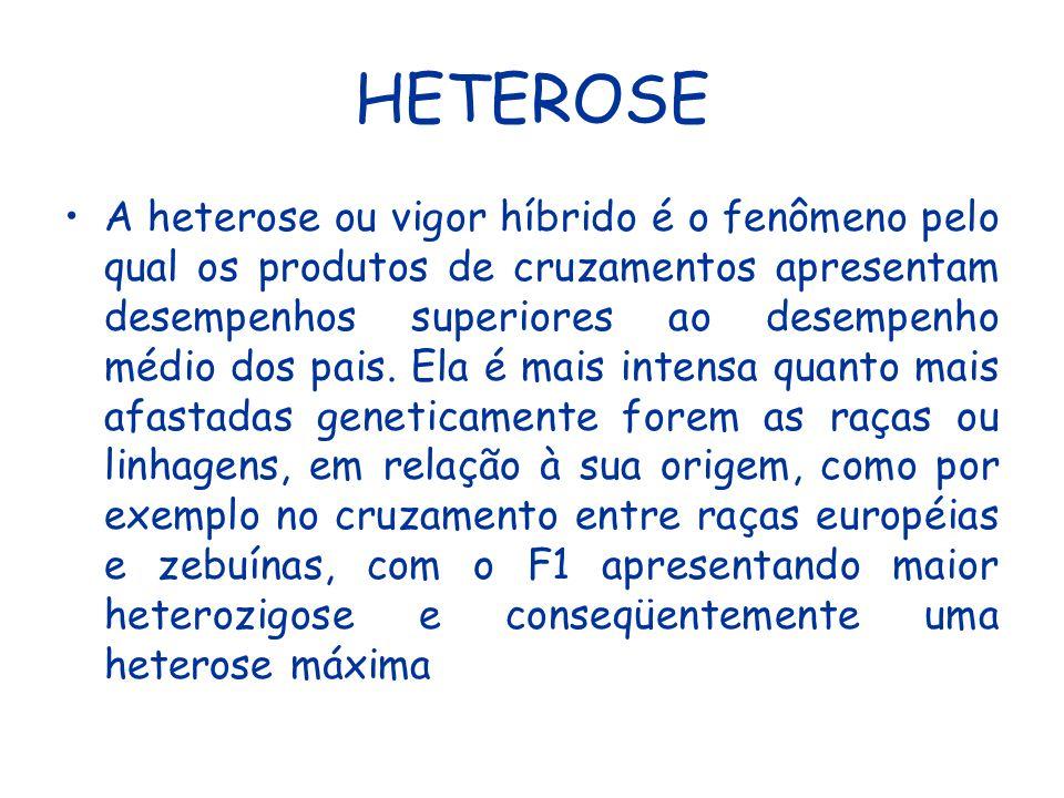 HETEROSE Em termos práticos, a heterose é explicada pelo aumento da heterozigose nos indivíduos resultantes dos cruzamentos e é devida a duas possíveis causas: a contribuição intra-locus (dominância) e entre locus (epistasia).