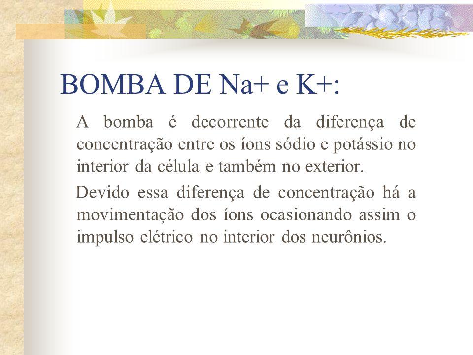 BOMBA DE Na+ e K+: A bomba é decorrente da diferença de concentração entre os íons sódio e potássio no interior da célula e também no exterior. Devido