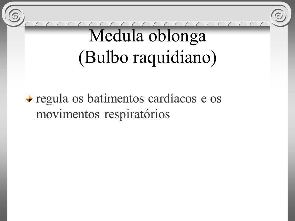 Medula oblonga (Bulbo raquidiano) regula os batimentos cardíacos e os movimentos respiratórios