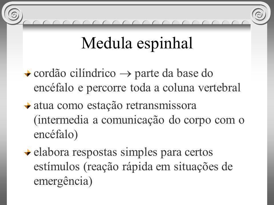 Medula espinhal cordão cilíndrico parte da base do encéfalo e percorre toda a coluna vertebral atua como estação retransmissora (intermedia a comunica