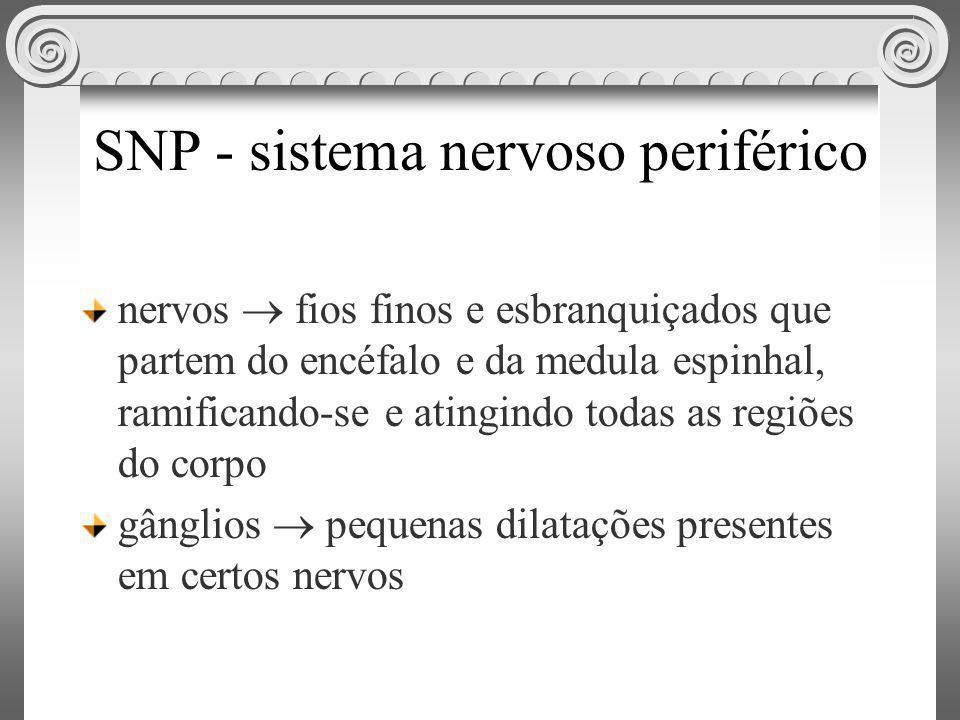 SNP - sistema nervoso periférico nervos fios finos e esbranquiçados que partem do encéfalo e da medula espinhal, ramificando-se e atingindo todas as r