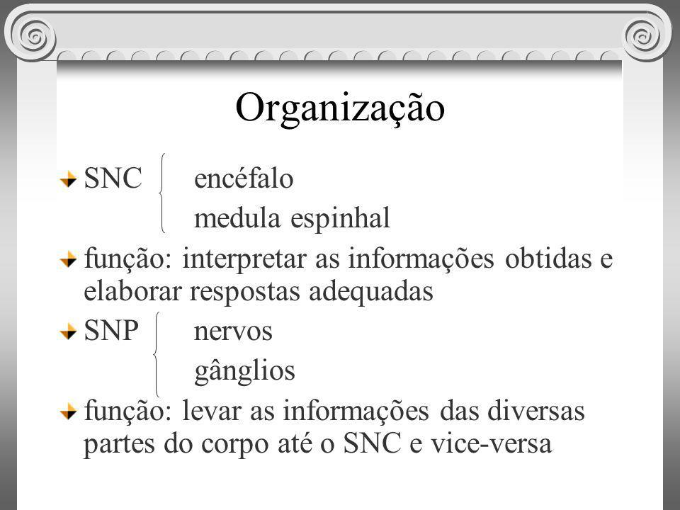 Organização SNC encéfalo medula espinhal função: interpretar as informações obtidas e elaborar respostas adequadas SNP nervos gânglios função: levar a